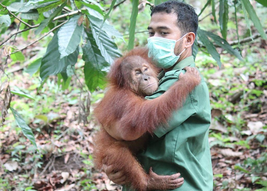 Arista and orangutan